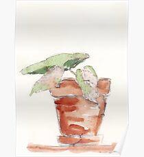 Begonia - foolproof? Poster