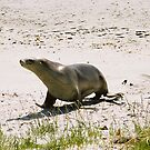Seal by bouche