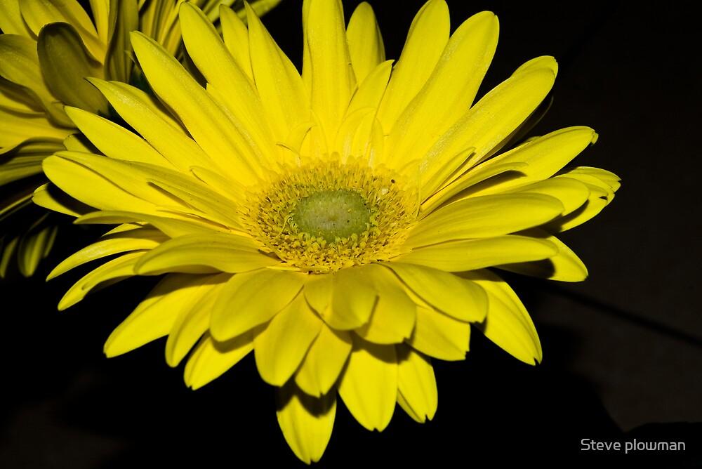 Yellow by Steve plowman