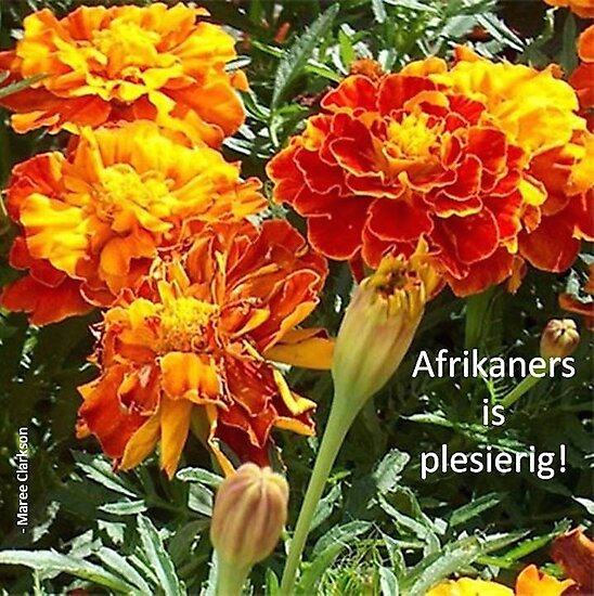 Afrikaners is plesierig! by Maree Clarkson