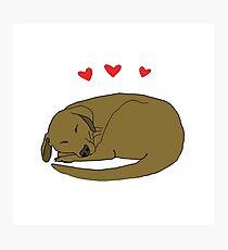 Dog Love  Photographic Print
