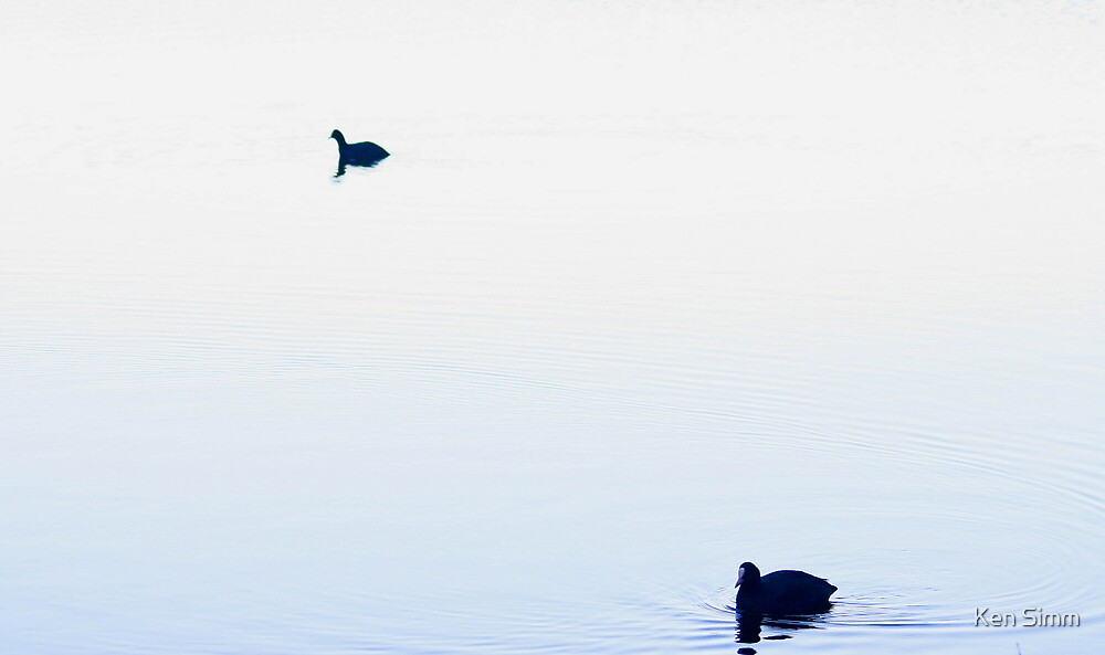 Two Coot by Kenart