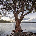 Lake Ainsworth HDR by Daniel Rankmore