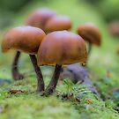 Funky Fungi by diveroptic