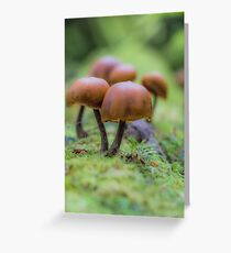 Funky Fungi Greeting Card