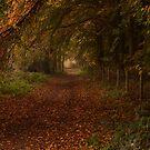 An autumn walk in norfolk by Mark Bunning