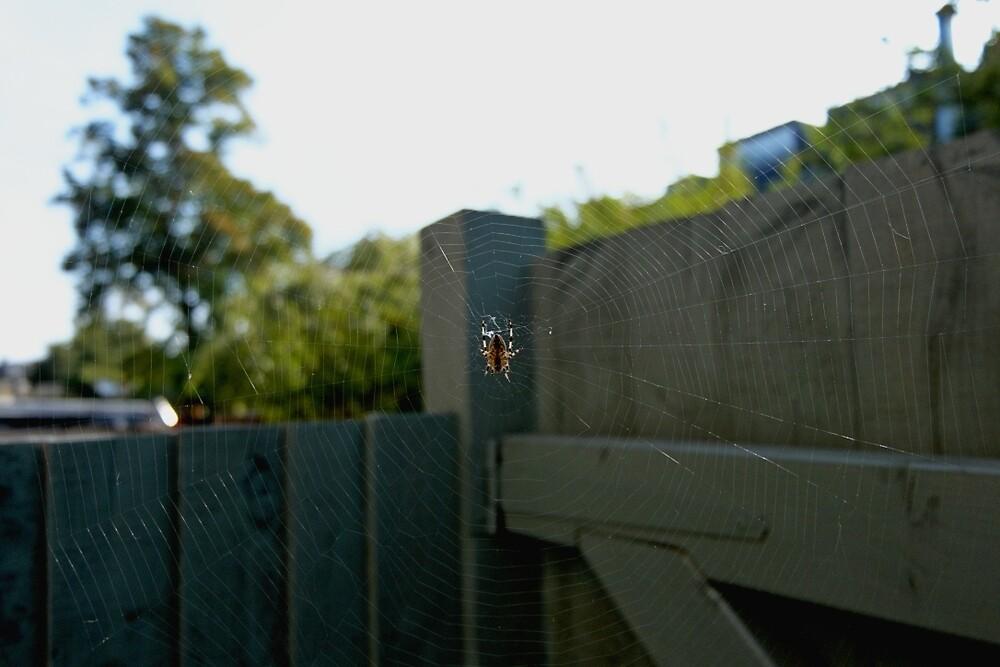 Little Spider by Viviane Mazin
