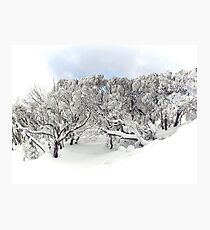 Thinking about the Snow (and how to get back there!) Photographic Print