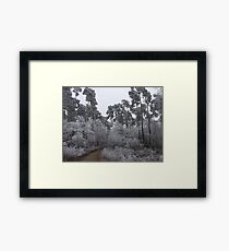 giants in the forest Framed Print