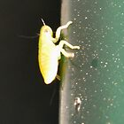 Aline  bug  by StuartBoyd