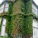 Ivy's House by Larry149