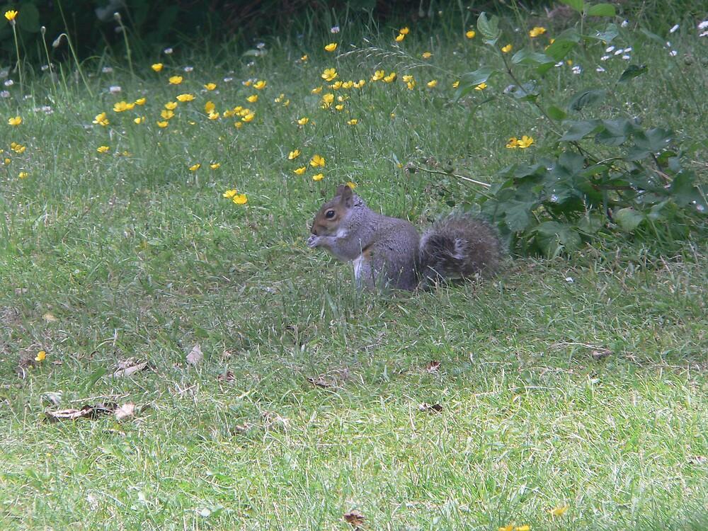 grey squirrel by sptanner69