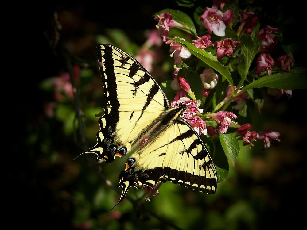 Butterfly by Kelli Short