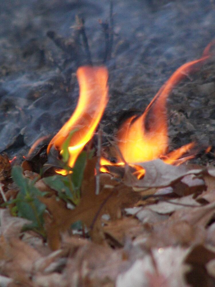 Flames by Kelli Short