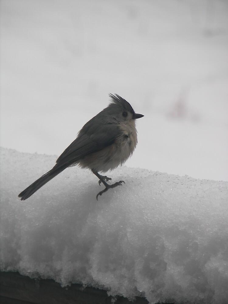 Winter Birds by Kelli Short