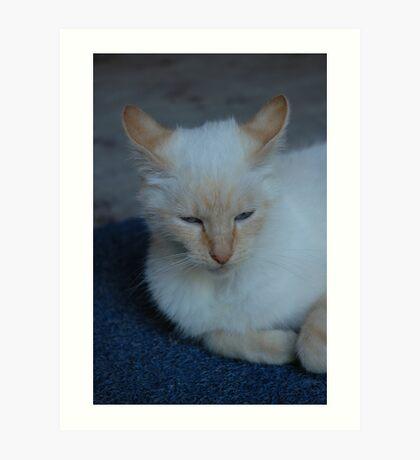 blue eyed cat Art Print