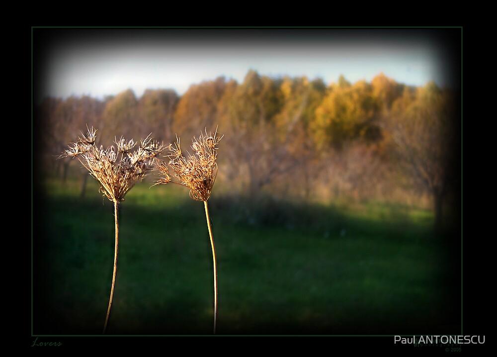 Lovers by Paul ANTONESCU
