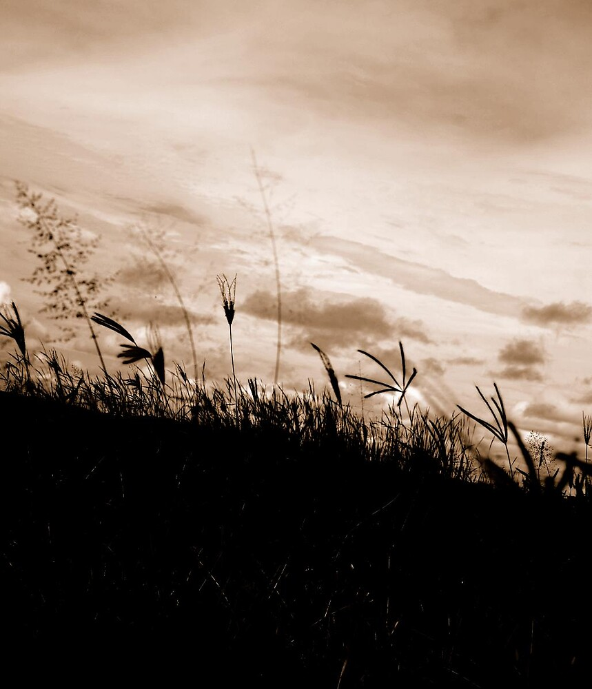African Grass plains by Colleen  Brink