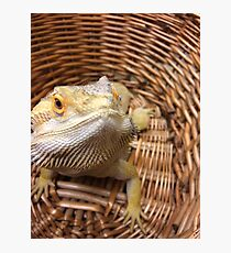 Bearded basket Photographic Print