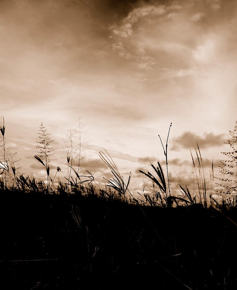 African Grass plains 2 by Colleen  Brink