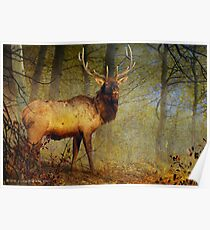 aspen forest bull elk Poster