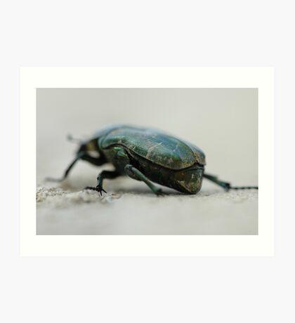 green armoured beetle Art Print