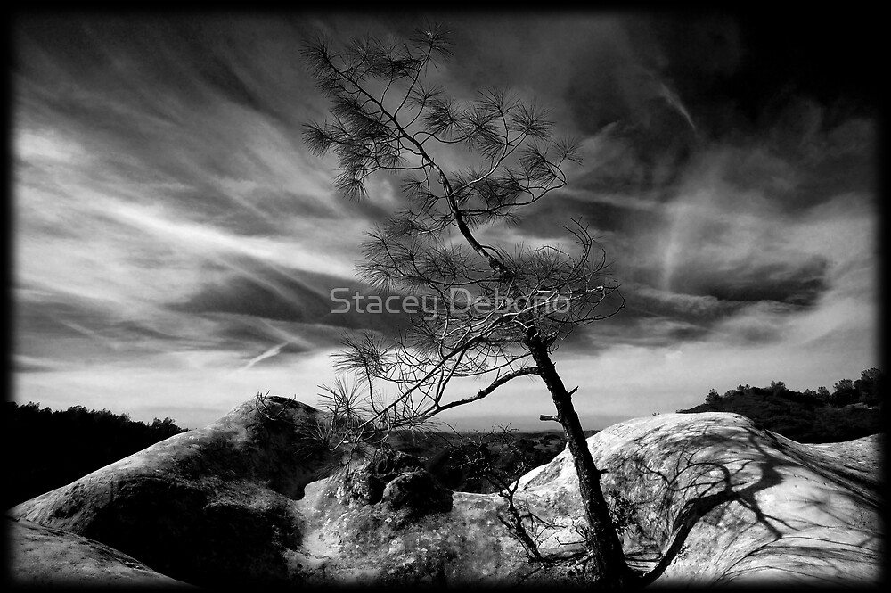 Leaning Tree of Diablo by Stacey Debono