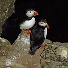 Puffins at night by Fiona MacNab