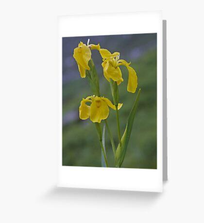 Yellow Flag Iris - Donegal Greeting Card