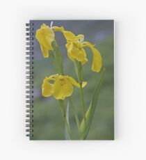 Yellow Flag Iris - Donegal Spiral Notebook
