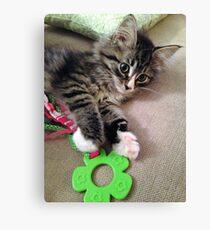 Precious Kitten Canvas Print