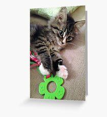 Precious Kitten Greeting Card