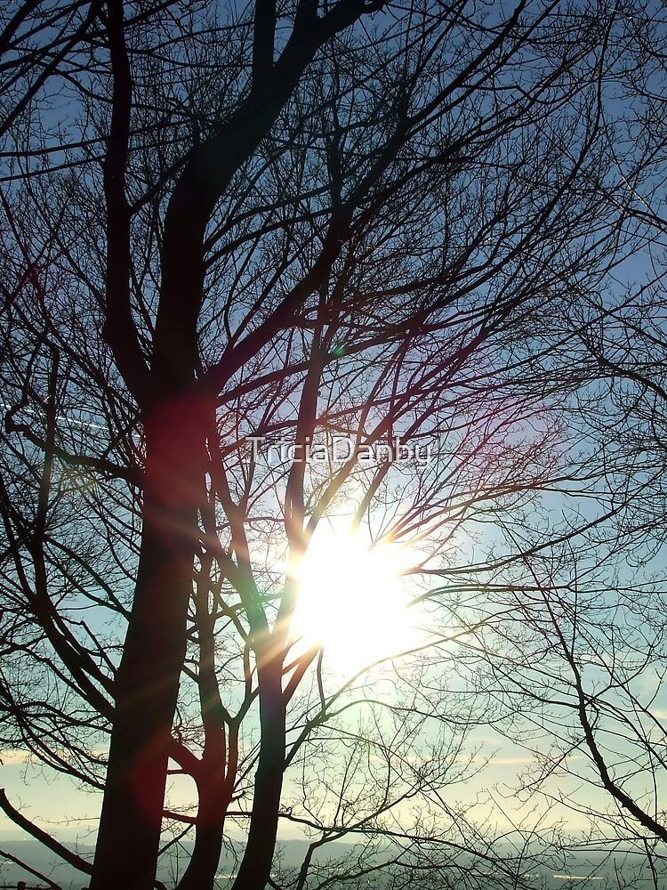 Winter sun by TriciaDanby