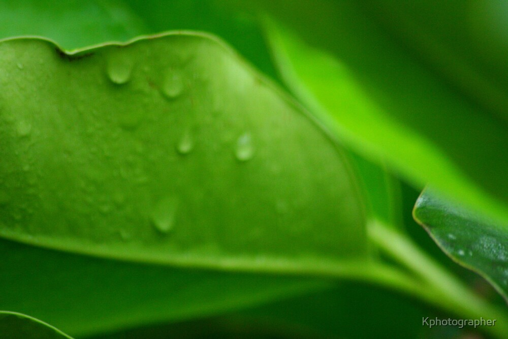 Lush Green Leaves by Kphotographer