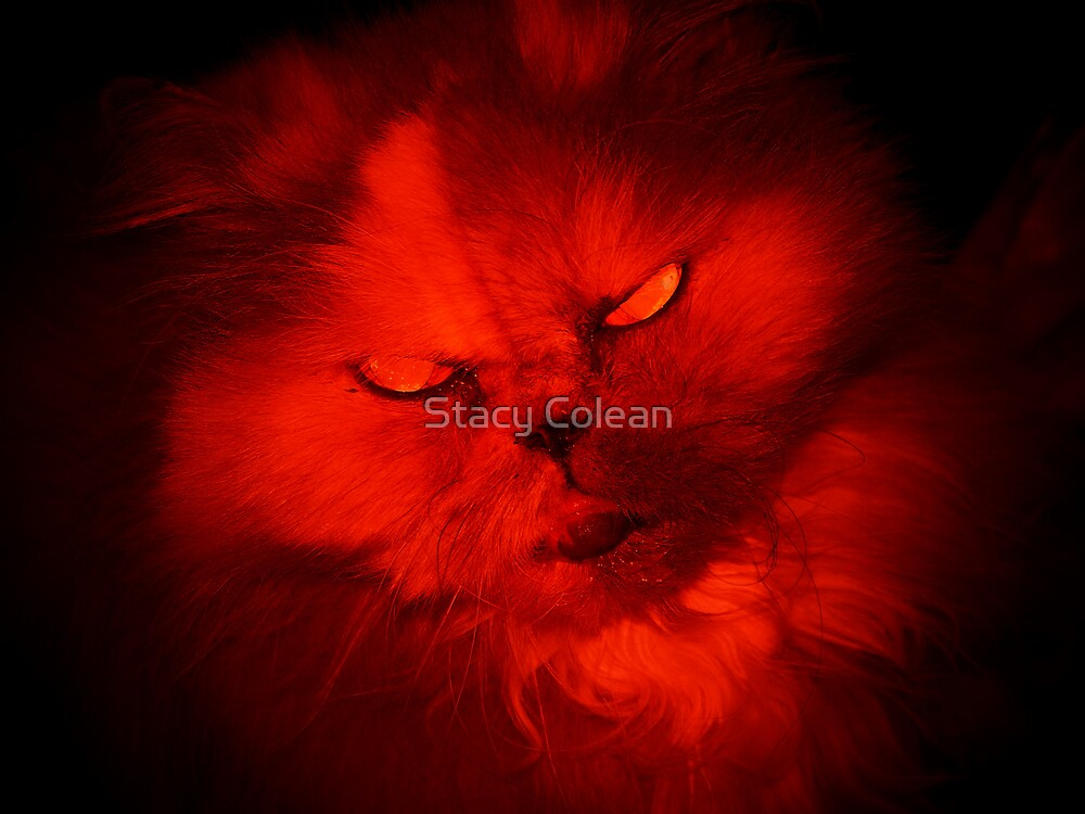 Hell Cat by Stacy Colean