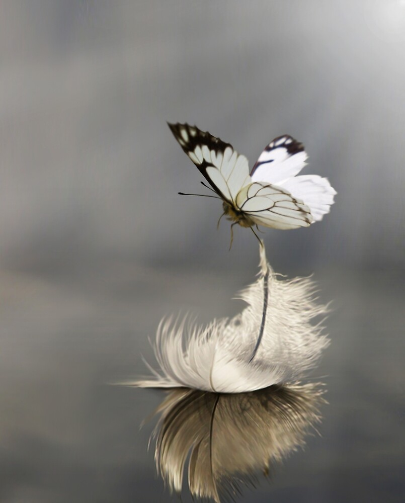 Delicate by Cliff Vestergaard