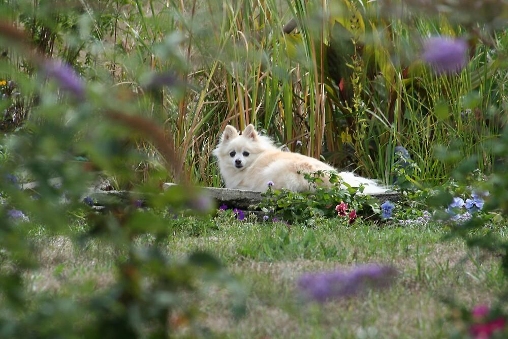dog lying down by smobou