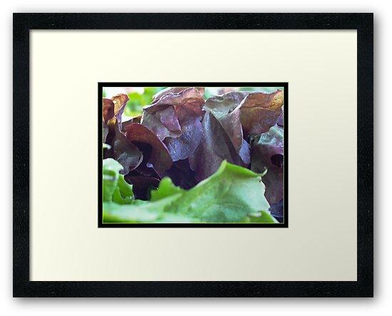 Salad by Rowan  Lewgalon