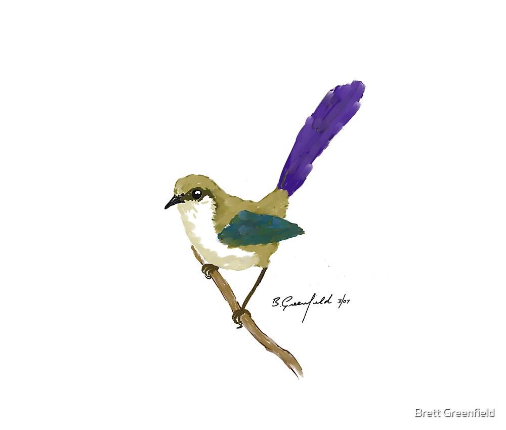 Splendid Fairy Wren by Brett Greenfield