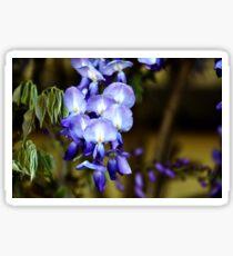 Wisteria _ purple Sticker