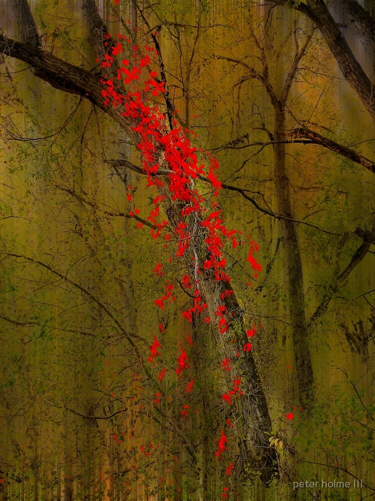 3685 by peter holme III