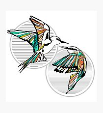 Rainbow Bee Eater Birds with Striped Graphic Photographic Print