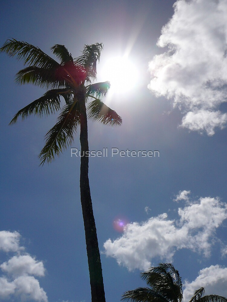 Palm Shade by Russell Petersen
