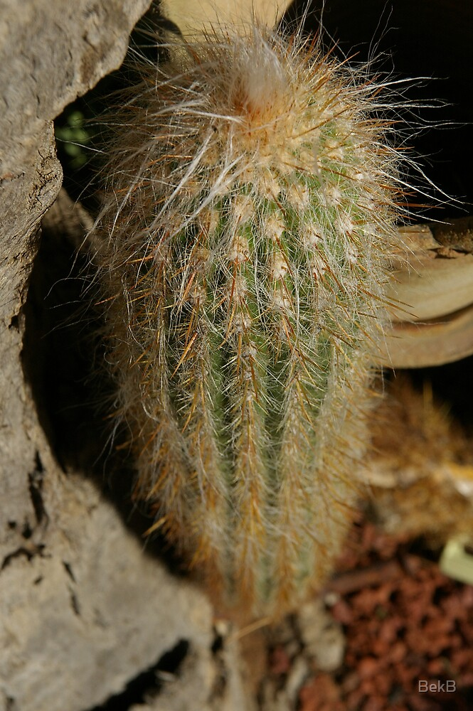 Cacti by BekB