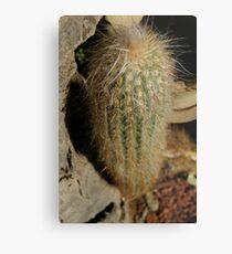 Lámina metálica Cactus