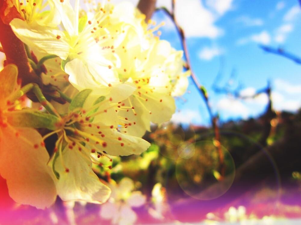 Spring by MjrGDesign