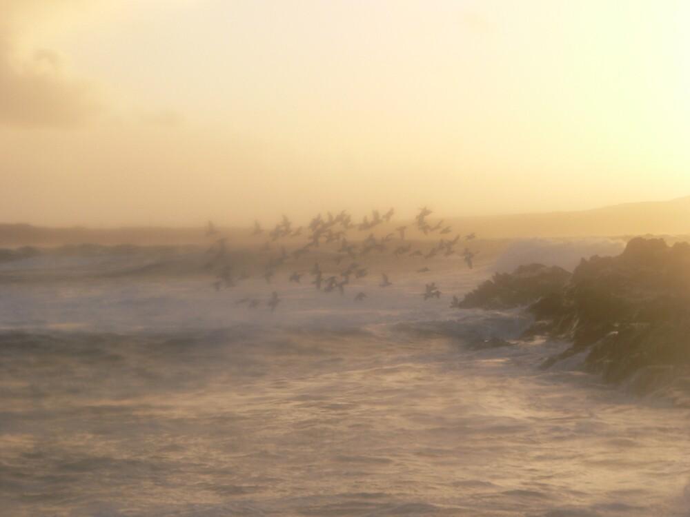 seabirds by sptanner69