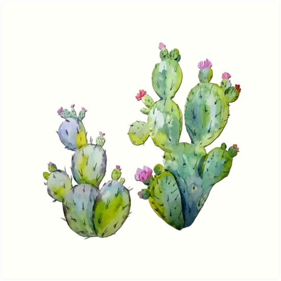 Blooming Watercolor Prickly Pear Cactus Art Print By Elaineplesser