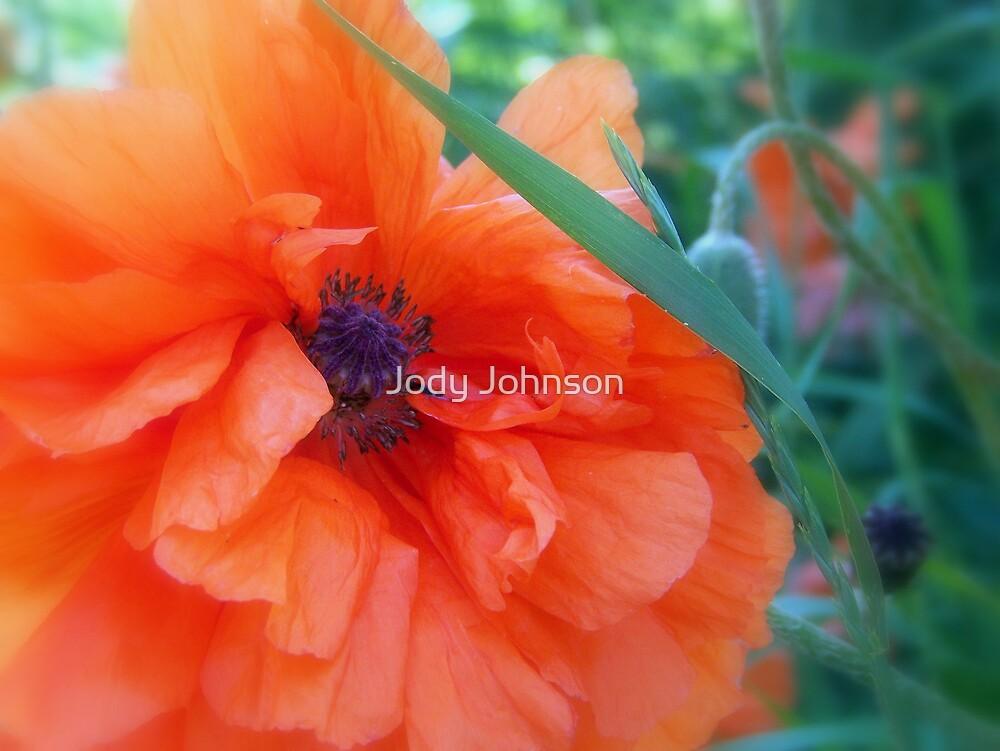 Orange poppy by Jody Johnson