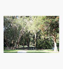 Public park near Petrie Photographic Print